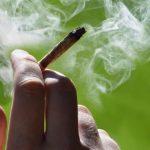 Amazing High-CBD Marijuana in Colorado | CBD OIL + Edibles