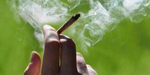 Amazing High CBD Cannabis in Colorado | CBD OIL + Edibles