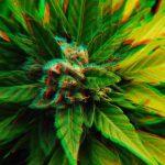 Marijuana News: Feds Locked Up 3,500 for Weed | Cost: $28 Billion