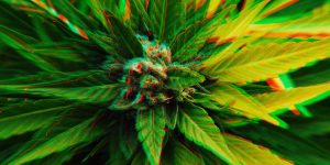 Marijuana Prohibition News: Feds Locked Up 3,500 for Weed | Cost: $28 Billion