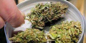 Spotlight: Marijuana Company Canopy Growth now in S&P/TSX Index