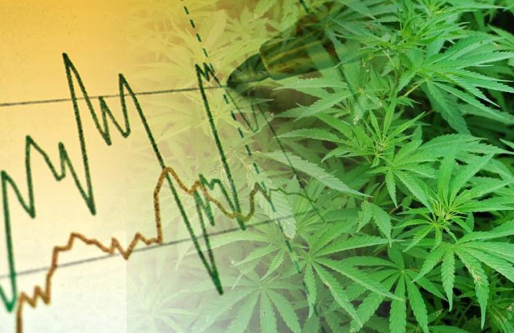 Cannabidiol   CBD 101 – High-CBD Cannabis and You