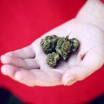 Brendan Kennedy on the ICBC – Marley Natural and Big Marijuana