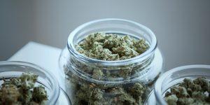 CBD News Picks – Late Breaking Cannabis News