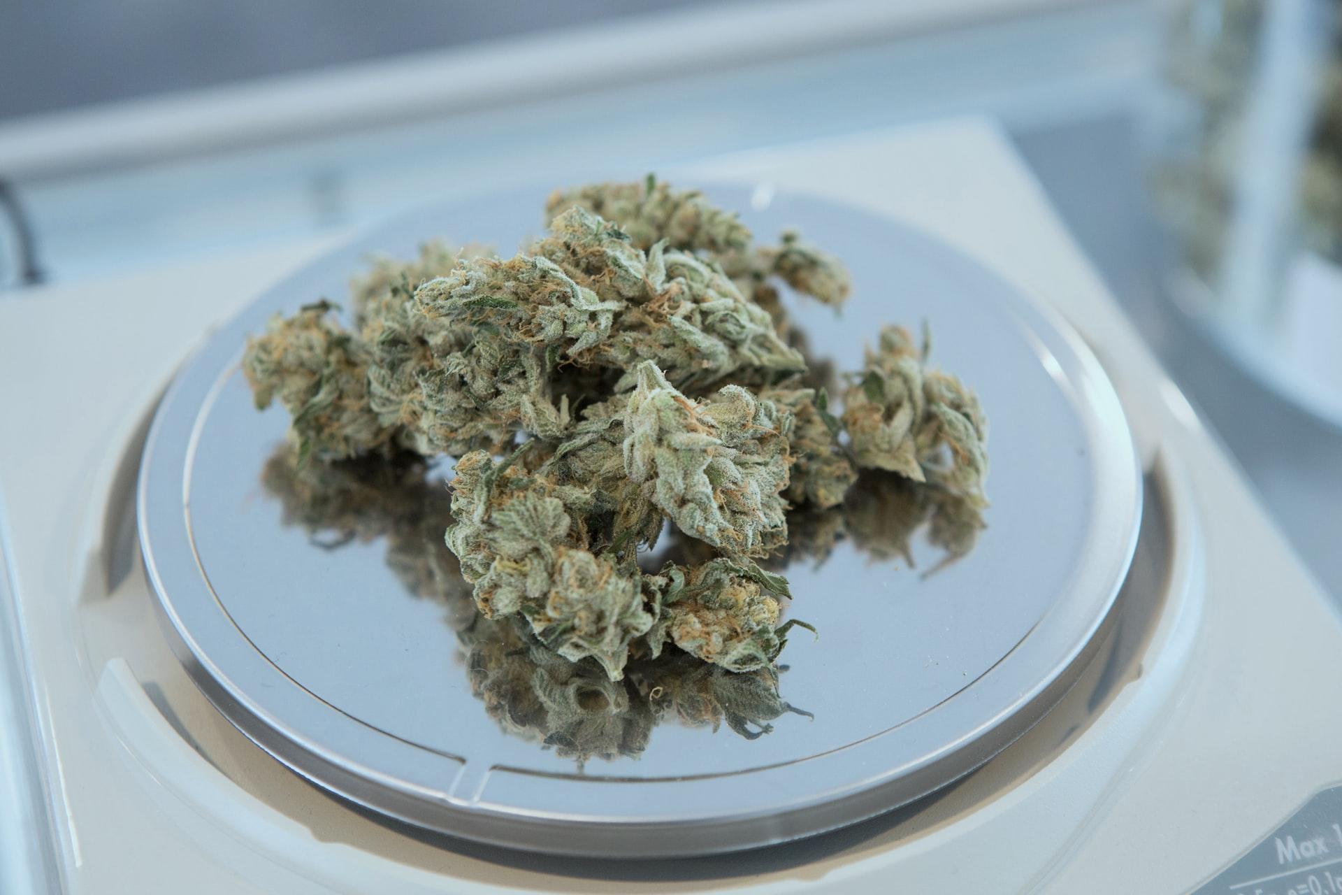 Cannabis Watchmen in Colorado