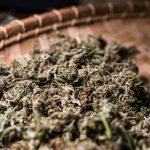 SF Private Cannabis Lounge