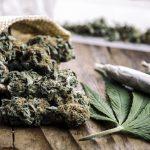 New Studies Show: CBD from Cannabis Reduces Schizophrenic Behaviors